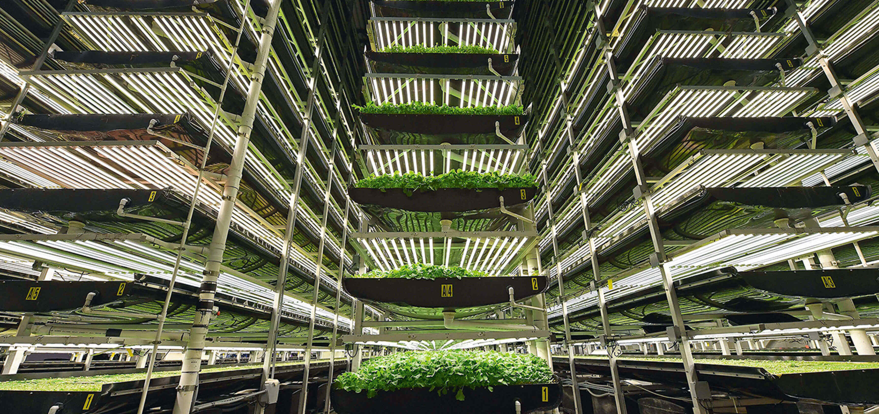 Vertical farms on the rise